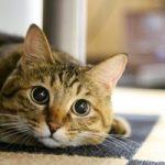 猫転送装置「猫ワープ」に本当に猫は寄って来るのか?