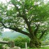 欅坂46 5thシングル「風に吹かれても」予約~収録曲と特典