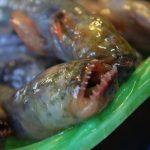 有明海の珍味「ワラスボ」の美味しい食べ方と通販情報